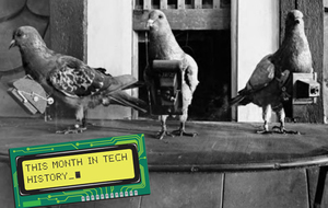pigeon-photographers