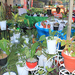 Backyard Gardeners Show lives up to its billing