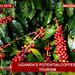 Uganda's potential coffee tourism
