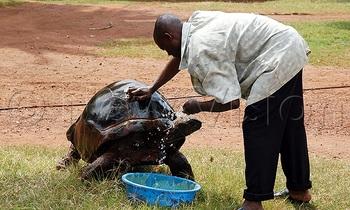 Tortoise 1 350x210