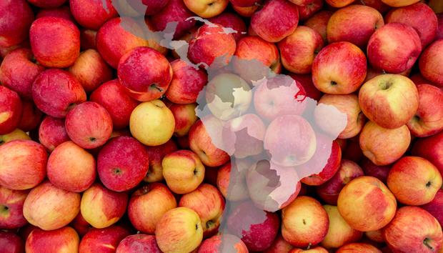 latam-apples