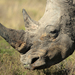 South African police nab Chinese man with 18 rhino horns