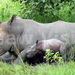 Fate of 24 endangered Rhinos hangs in balance