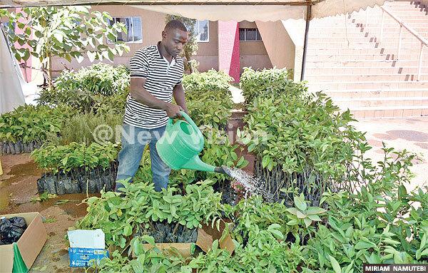 n employee of akula ursery ardens watering plants on display