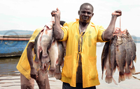 Fish prices drop by 12%