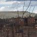 Johannesburg suffocates in shadow of mine dumps