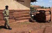Former legislator in trouble over illegal timber