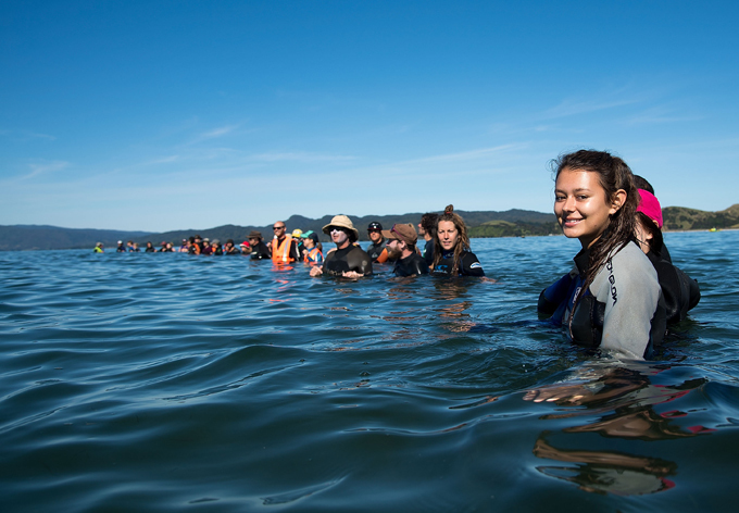 olunteers make a human wall to stop the ilot returning to shore during the mass stranding  hoto