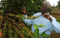 May coffee exports rise 56 percent