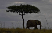 Two Tanzanians trampled to death by elephants