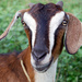 Gulu teen jailed four years for theft of father's goat