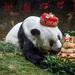 Bye bye Basi: World's oldest captive panda dies