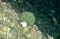 Could a green sponge hold cancer-fighting secrets?