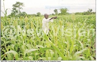 NARO pushes for improved crop quality, productivity