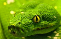How to prevent snakes in your compound with plants