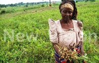 Minting millions from mixed farming